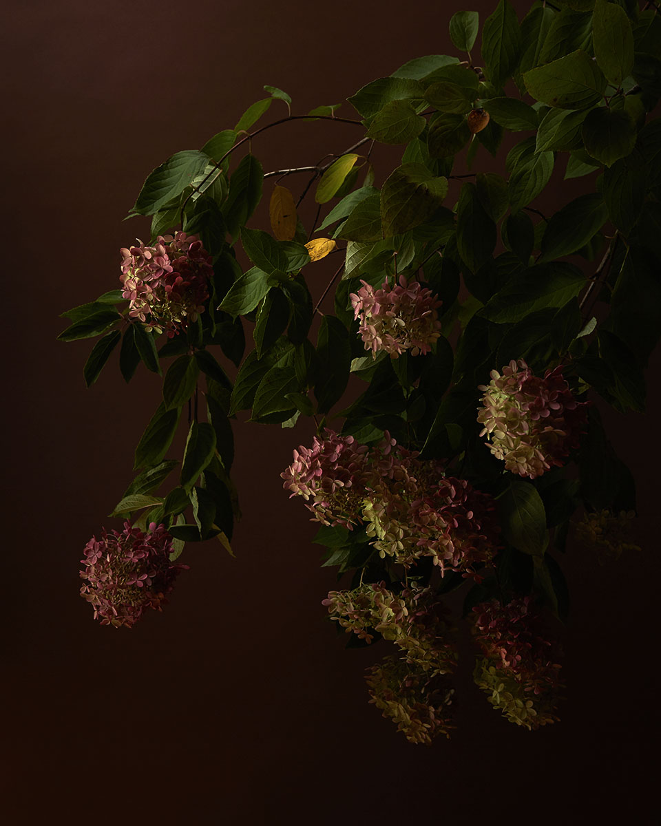 100420_Flowers_1615a